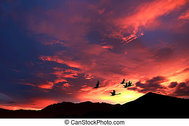 Beautiful sky on sunset or sunrise with flying birds natural background
