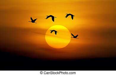 Beautiful sky with flying birds natural background