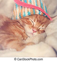 Beautiful sleeping red solid maine coon kittens covered in...