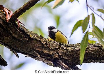 beautiful small bird great tit in spring