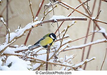 beautiful small bird great tit in winter