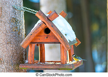 beautiful small bird great tit sitting on the bird feeder in winter