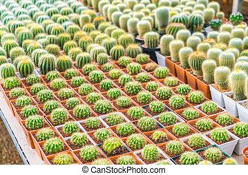 Beautiful small cactus field .