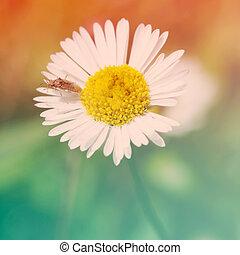 Beautiful small flower in garden