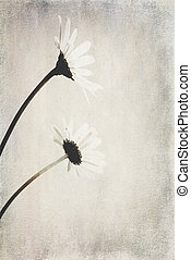 small original delicate free field camomile flowers on a light background