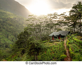 Beautiful small wooden house on the mountain hill in jungle forest at sunrise