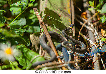 beautiful snake lies on meadow