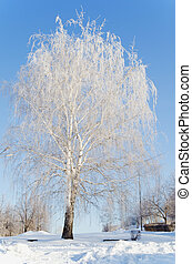 Beautiful snow-covered birch in winter day