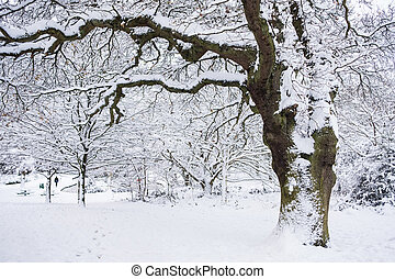 Beautiful Snow Covered Grove Park Harborne - Beautiful view...