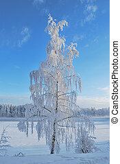 Beautiful  snow-covered tree