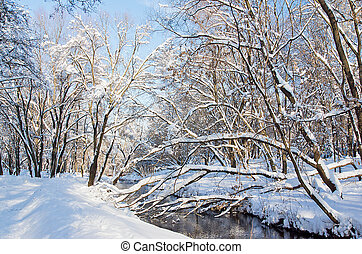 beautiful snow covered trees and a river in the winter park