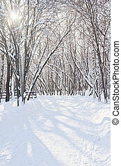 beautiful snow covered trees in a winter park in the afternoon