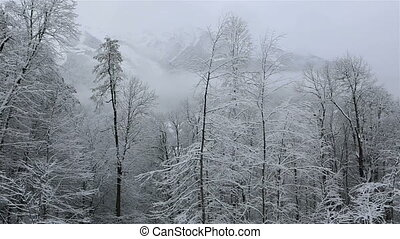 Beautiful snow covered trees in mountains - Beautiful snow...