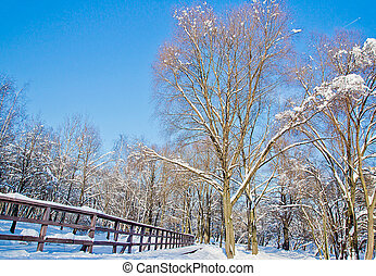 beautiful snow covered trees in winter park