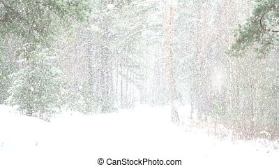 Beautiful snow shower in the forest