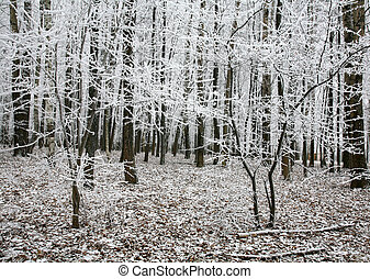 Beautiful snow trees in autumn forest