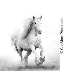 Beautiful snow white horse running