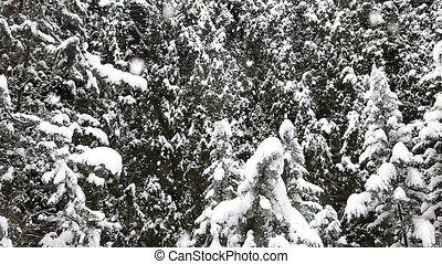 Beautiful snowfall in the tropics