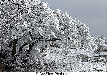 Beautiful snowy branch