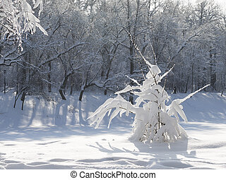 Beautiful Snowy Tree