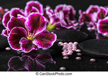 beautiful spa background of geranium flower, beads and black zen stones with drops in reflection water, closeup
