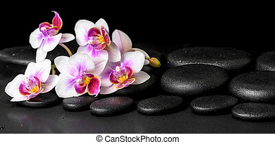 beautiful spa background of purple orchid phalaenopsis on black zen stones with drops, panorama