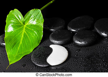 beautiful spa background of Yin-Yang stone texture, green leaf with dew and black zen stones, close up