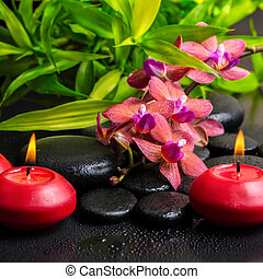 beautiful spa composition of twig red orchid flower, phalaenopsis, bamboo with water dew and candles on zen basalt stones, closeup