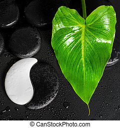 beautiful spa concept of Yin-Yang stone texture and green leaf Calla lily with dew on black background with zen stones, close up
