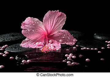 Beautiful spa setting of delicate pink hibiscus, zen stones with drops and pearl beads on ripple water, closeup