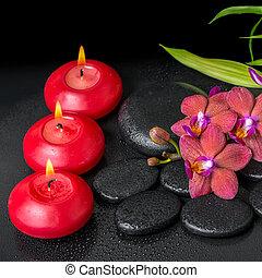 beautiful spa setting of twig red orchid flower, phalaenopsis, b