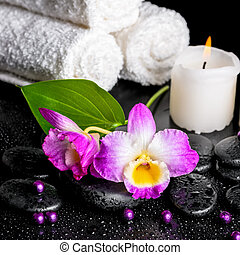 beautiful spa still life of purple orchid dendrobium, leaf with