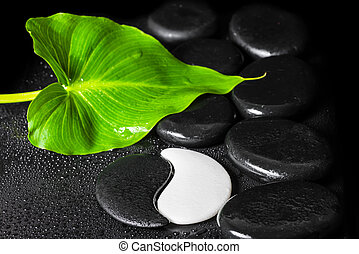 beautiful spa still life of Yin-Yang stone texture symbol, green leaf with dew and black zen stones, close up