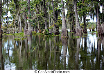 Beautiful spanish moss trees in swamp - Trees reflected in...