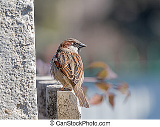 beautiful Sparrow sits on the fence