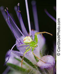 Beautiful Spider on a Purple Flower