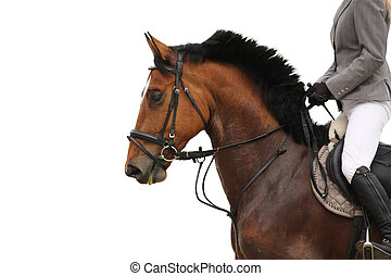 Beautiful sport horse portrait on white background -...