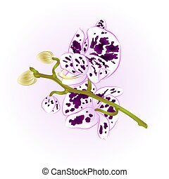 Beautiful spotted Orchid purple and white  stem vector.eps