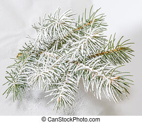 Beautiful sprig of fir covered with artificial snow.