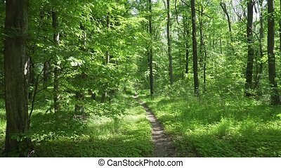 Beautiful Spring Alley in the Forest