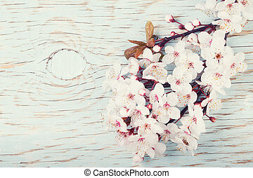 Beautiful spring cherry blossom flowers on a light blue wooden b
