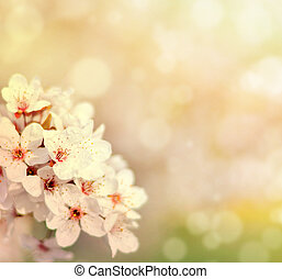 Beautiful spring cherry tree with flowers and bokeh