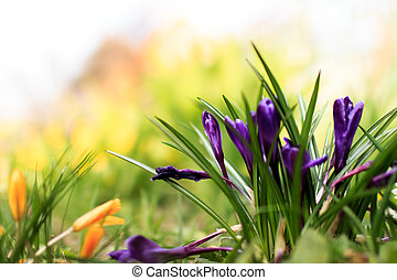 beautiful spring colored flowers in the garden