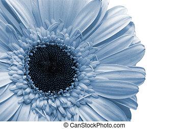 Beautiful spring flower