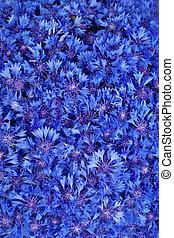 Beautiful spring flowers blue cornflower on background