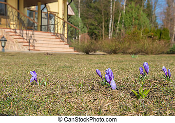 Beautiful Spring Flowers on the front lawn