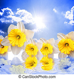 Beautiful spring flowers on the sky background reflacting in wat