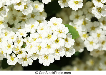 Beautiful spring flowers outdoors