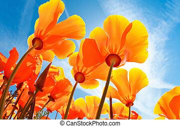 Spring Flowers, Macro View Looking up towards Sky