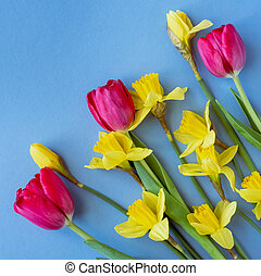Beautiful spring flowers tulips, daffodils on a blue background.